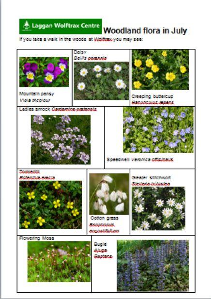 Laggan Forest Trust - Plants